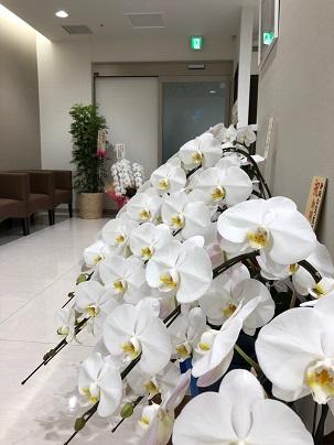 内覧会のお花3